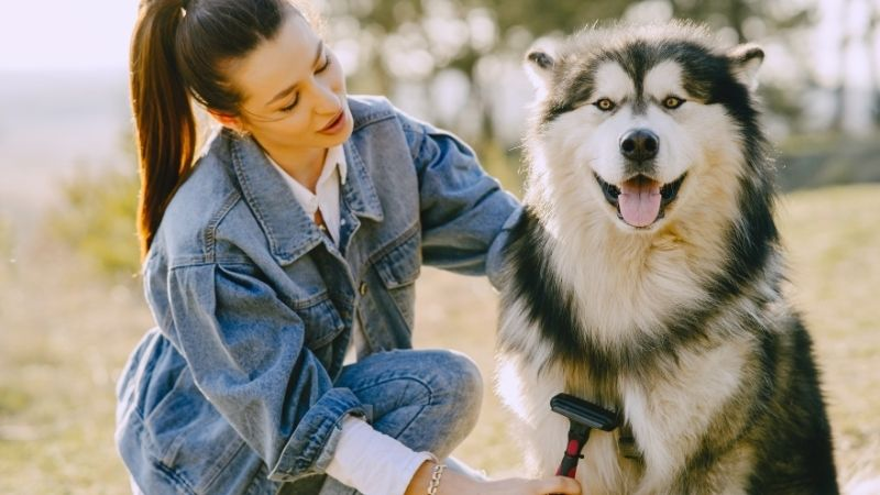 How to prevent matted dog hair